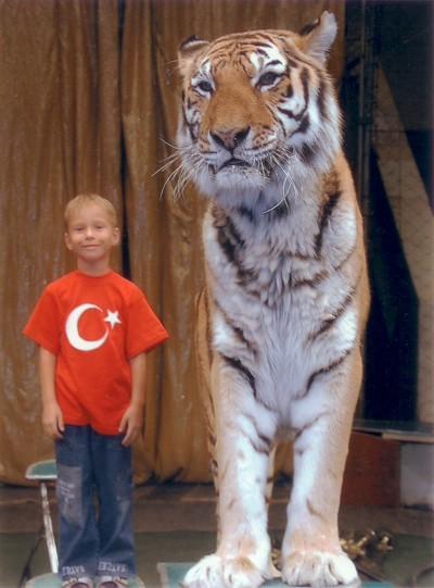 daniil-tiger